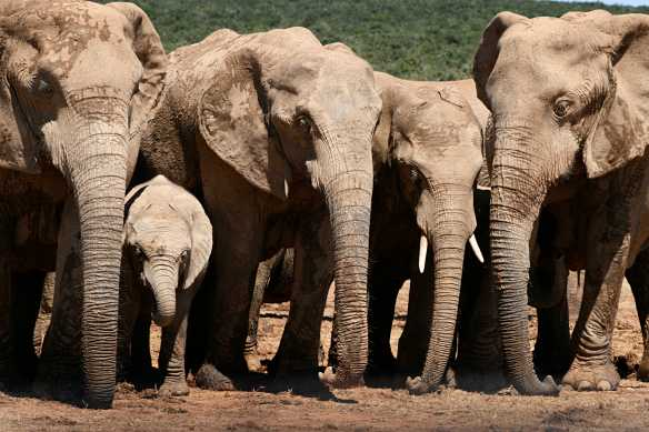 We were so close to this herd of elephants we could almost touch them. These gorgeous creatures mourn the loss of a member of their herd. Poaching & trophy hunting is devastating for those remaining in the herd.